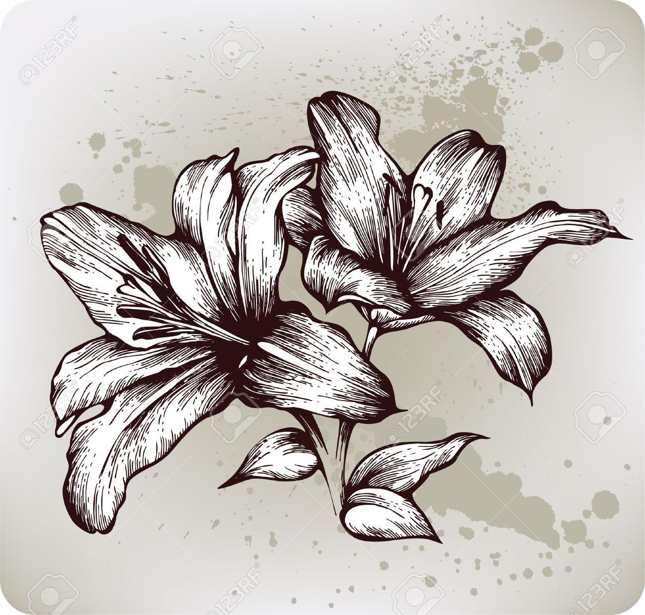 Fleur Lys Dessin A La Main Vector Illustration Clip Art Libres De