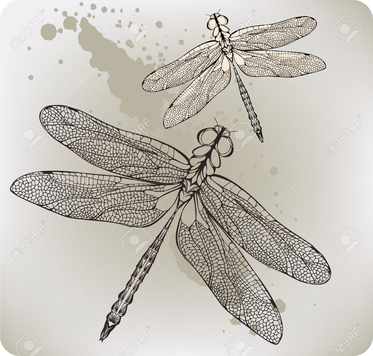 dragonfly tattoo images u0026 stock pictures royalty free dragonfly