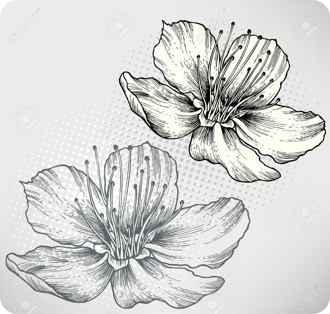 Los Albaricoques De Flores A Mano Ilustracion Dibujo