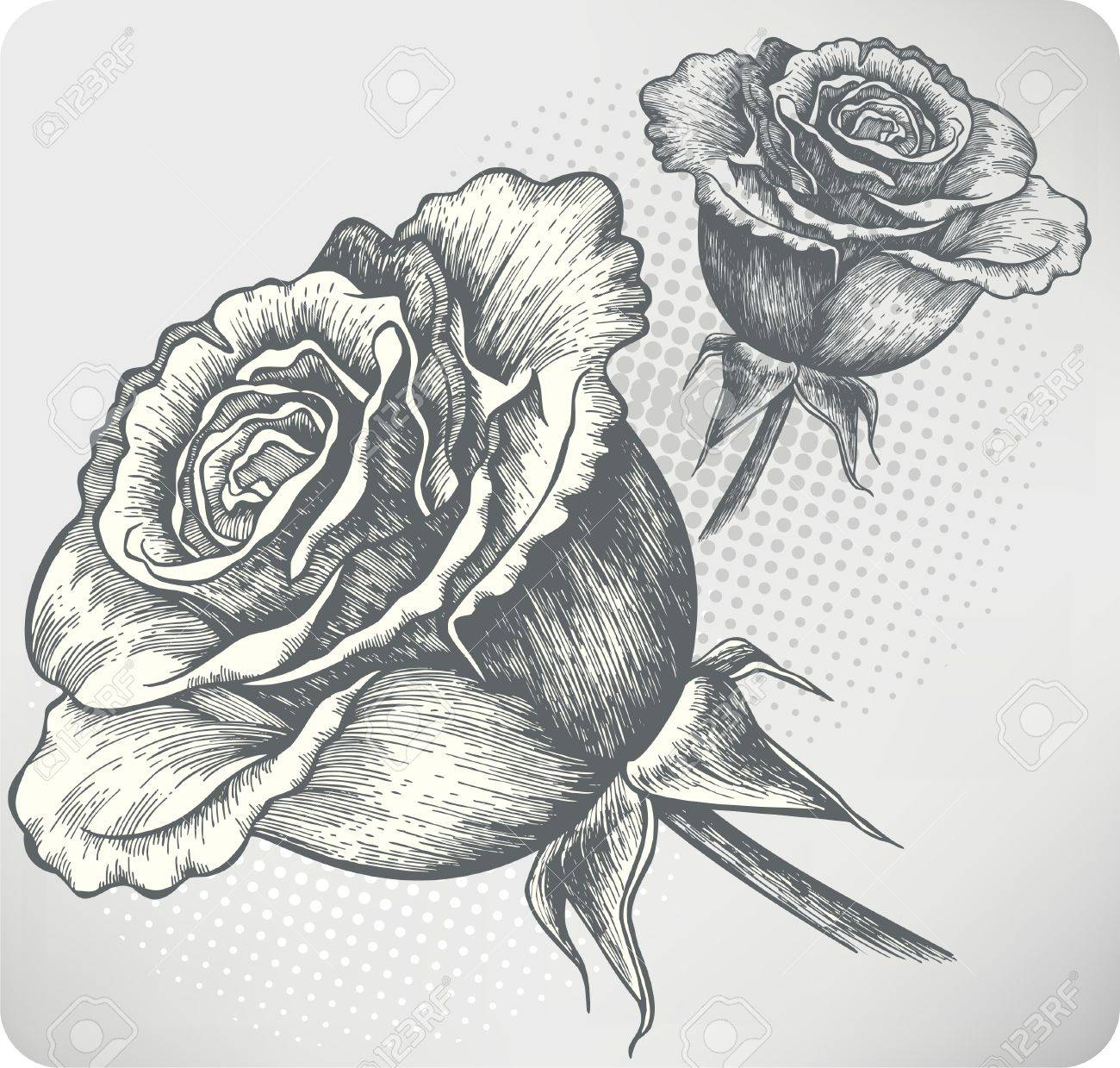 Blooming Rose vintage, hand-drawing. Vector illustration. Stock Vector - 13601581