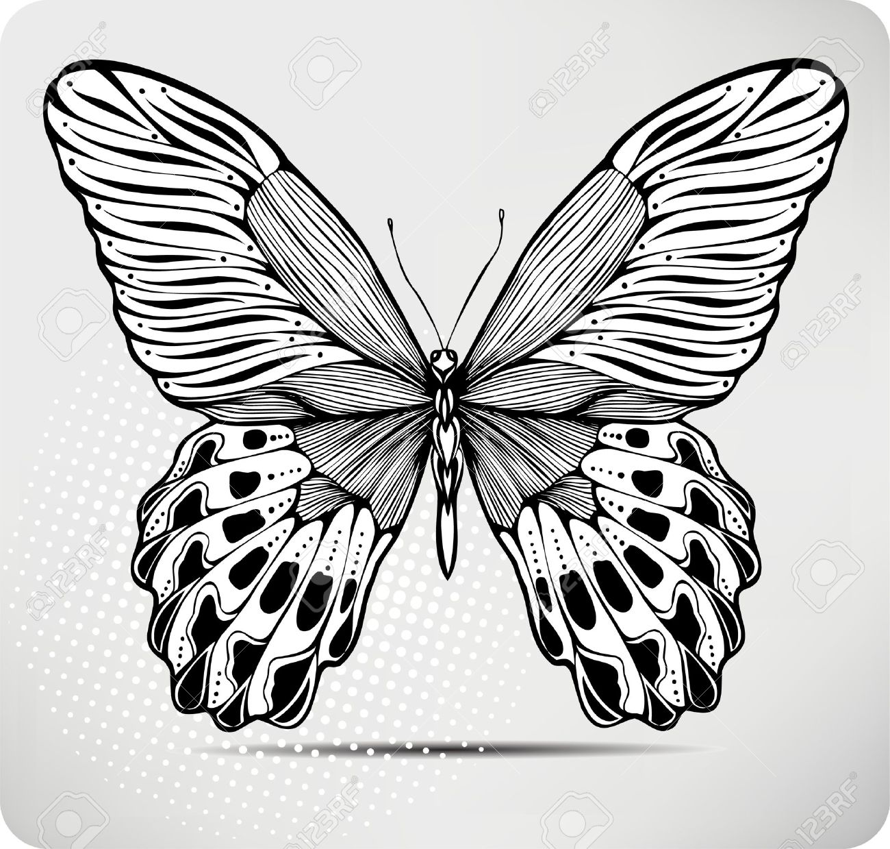 butterfly hand drawing illustration royalty free cliparts