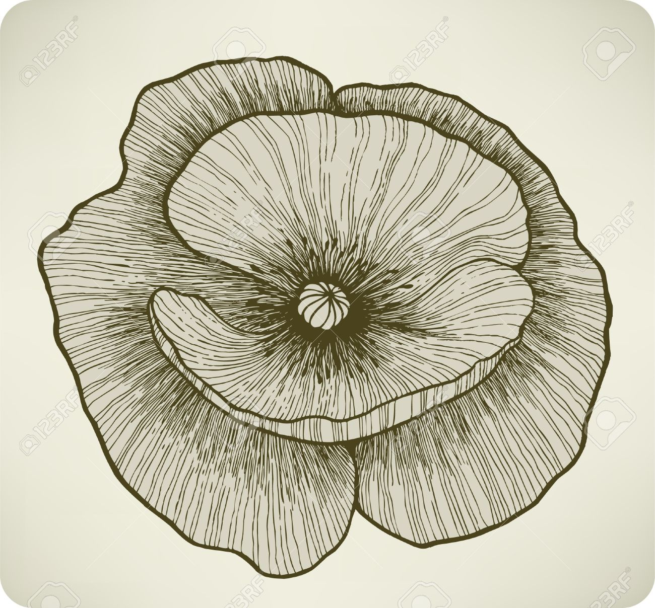 Poppy flower, hand drawing.  illustration. Stock Vector - 17477093