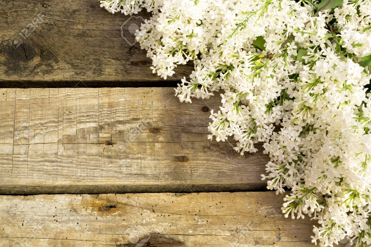 Lilac flowers on wooden background. Spring floral background - 143602665