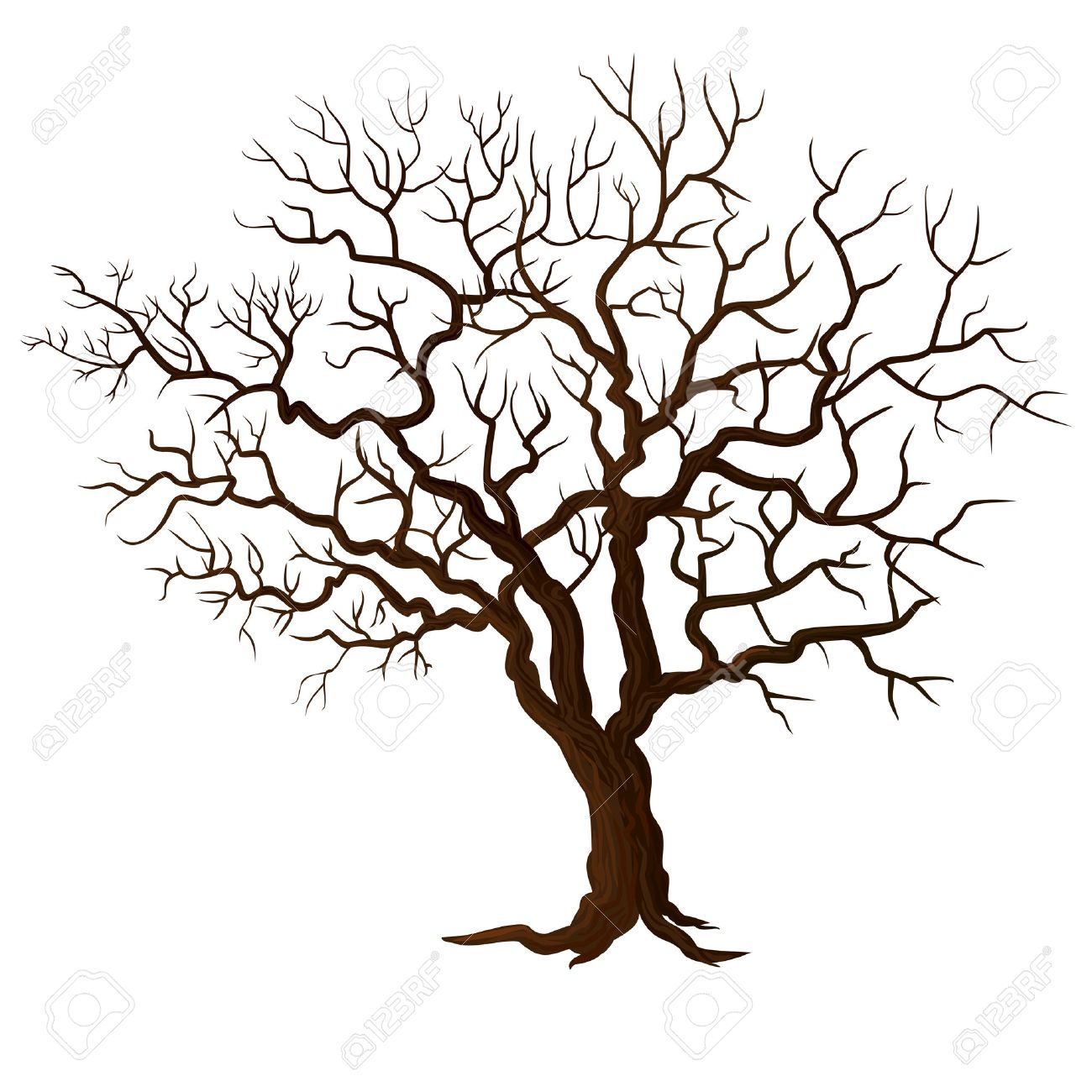 Tree without leaves isolated How To Draw A Cartoon Tree Without Leaves