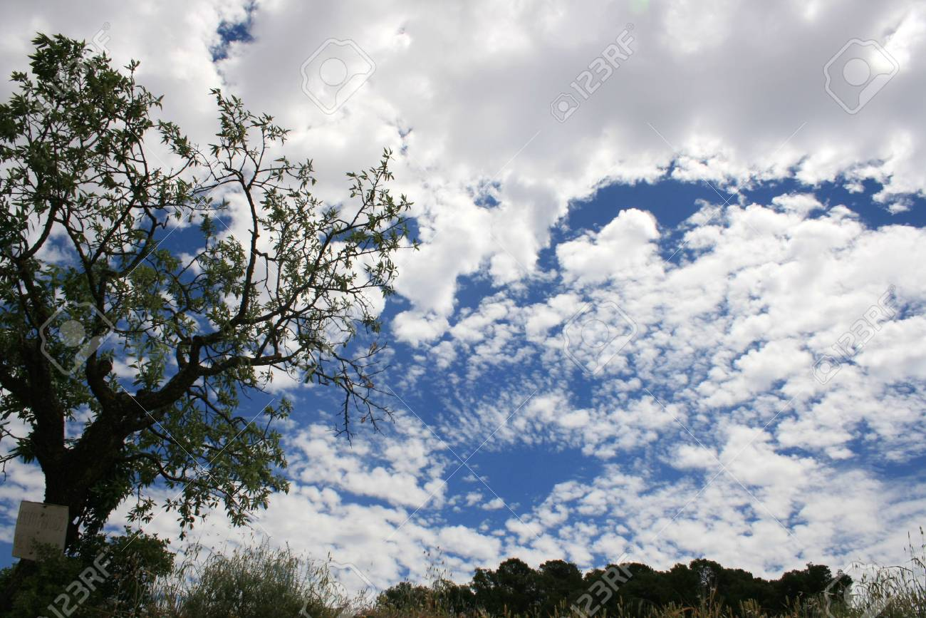 Cloudy sky and old tree Stock Photo - 3828629
