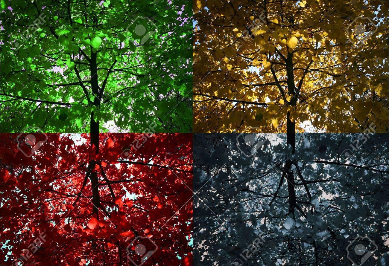 Four seasons tree Stock Photo - 3877707