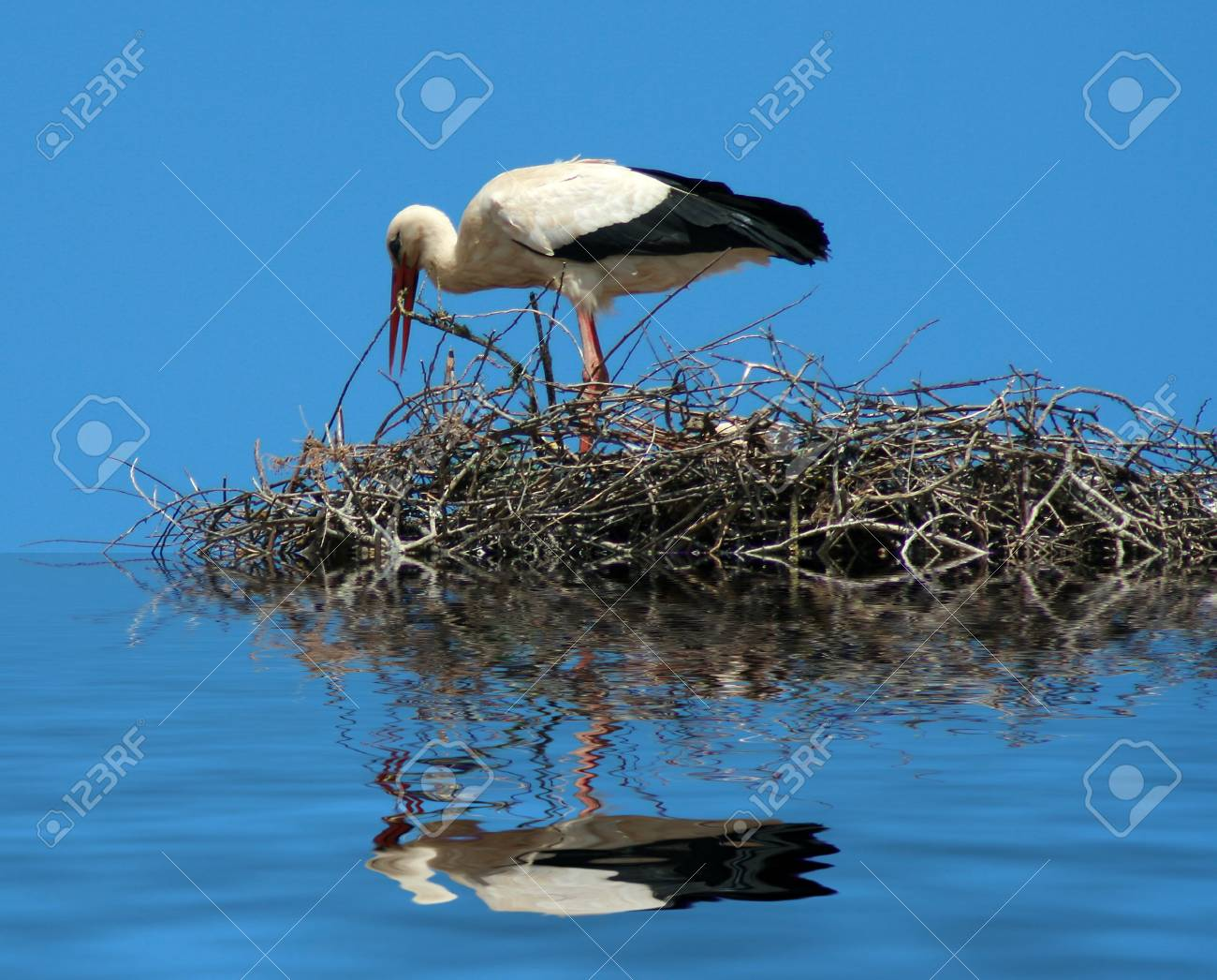 a mother stork bird on a chimeny Stock Photo - 4888222