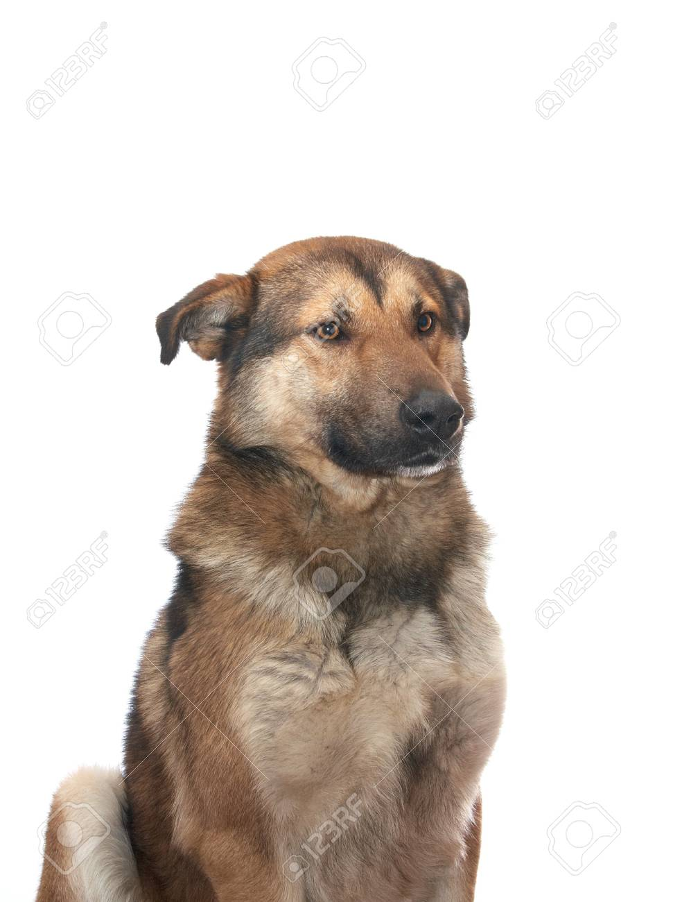 Dog on the white background Stock Photo - 4191844
