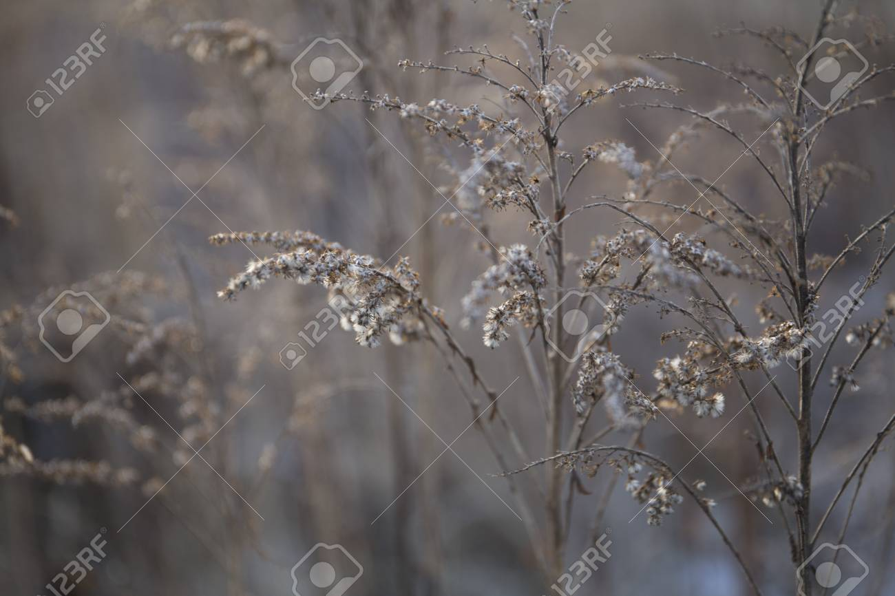 Beautiful dry withered frozen winter plants background Stock Photo - 94283433