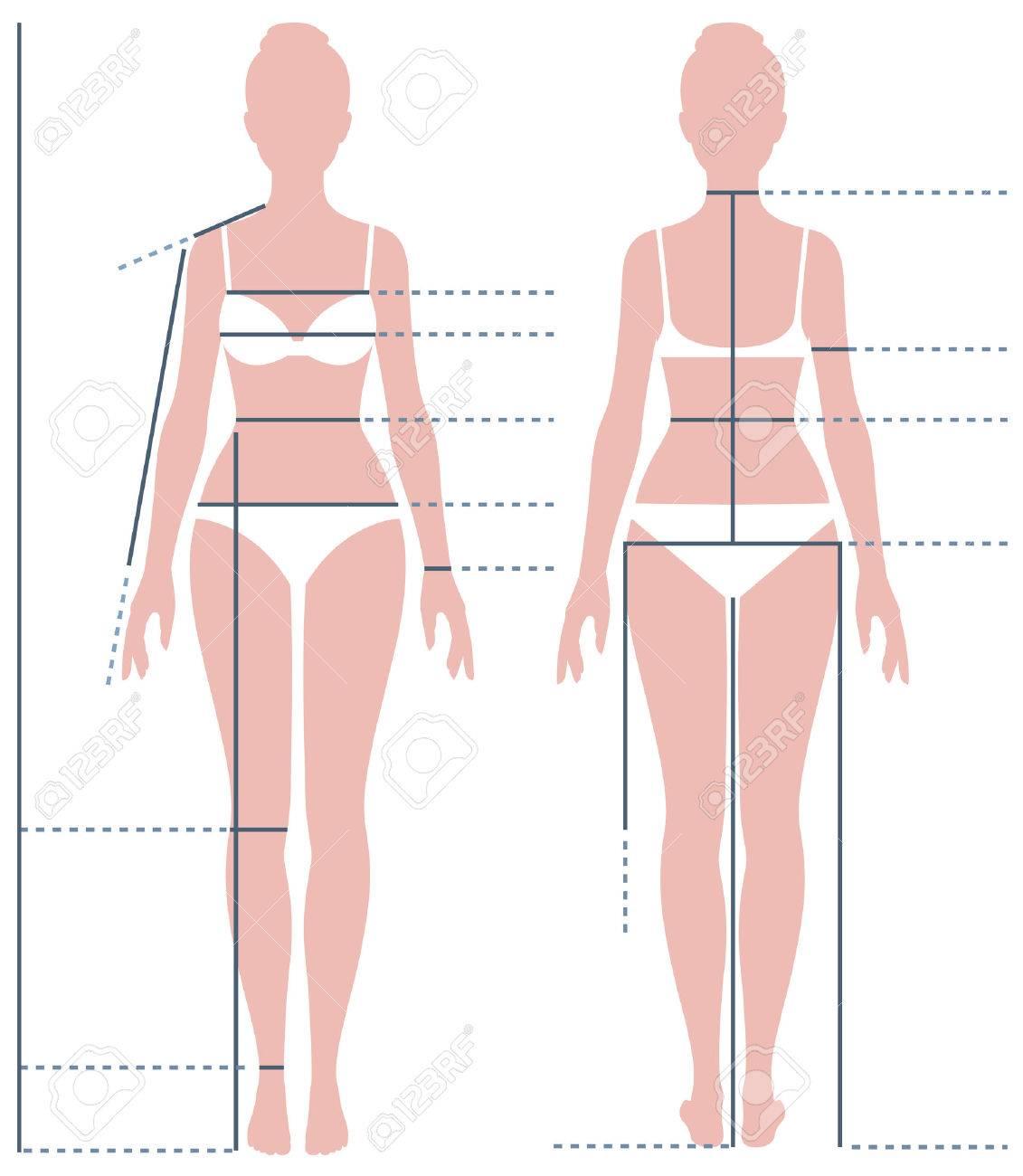 Cuerpo Femenino En Toda Su Longitud Para Medir El Tamaño Del Vector ...