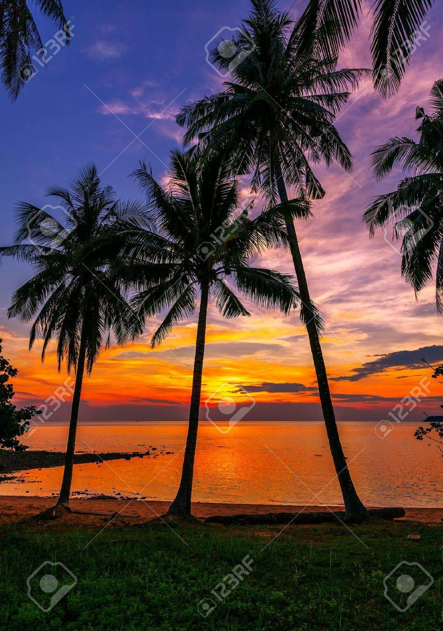 Tropical beach at sunset - 14946784