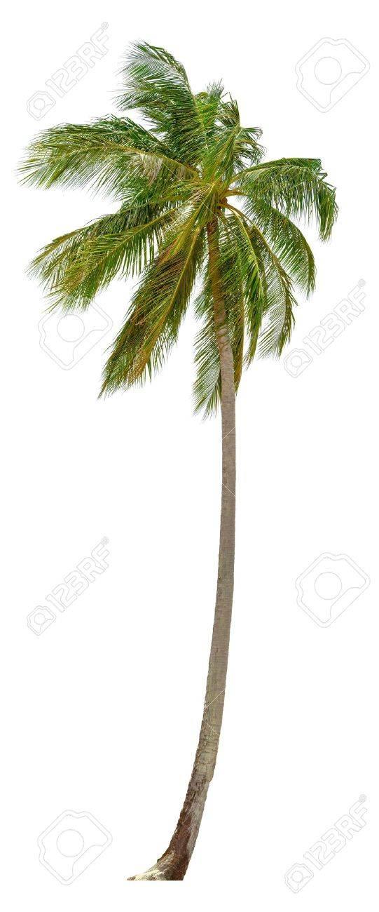 palmier xxl