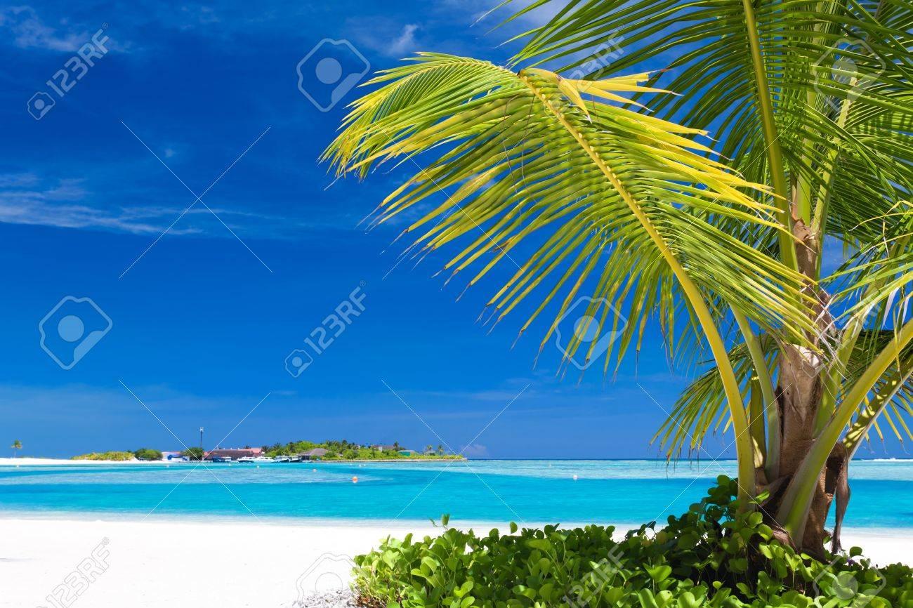 Small palm tree hanging over stunning blue lagoon Stock Photo - 11829962