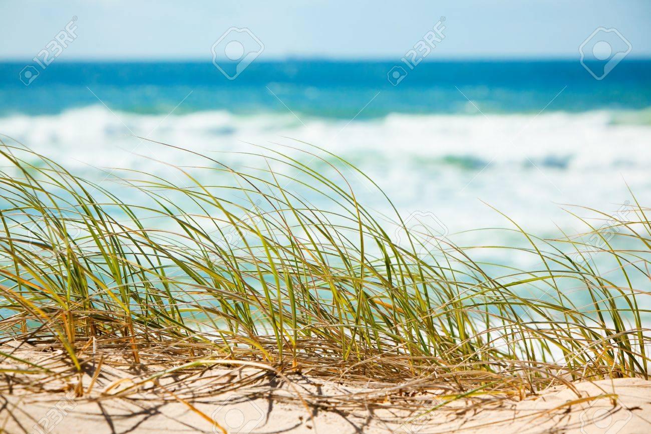 Green grass on sandy dune overlooking tropical beach - 13503785