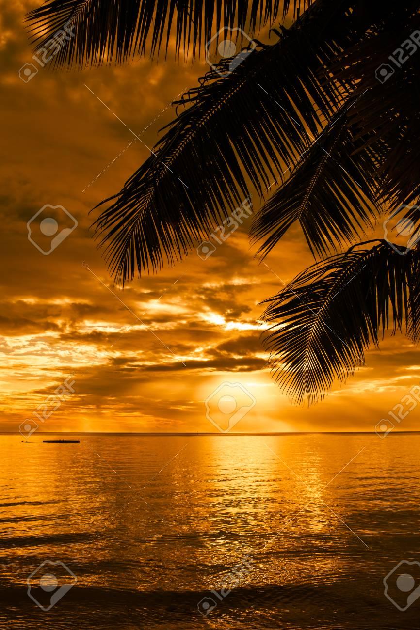 Palmen Blatter Silhouette An Einem Schonen Strand Bei