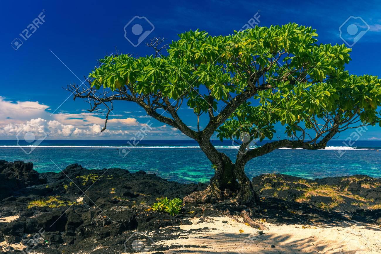 ウポル、サモア諸島の黒い溶岩石...