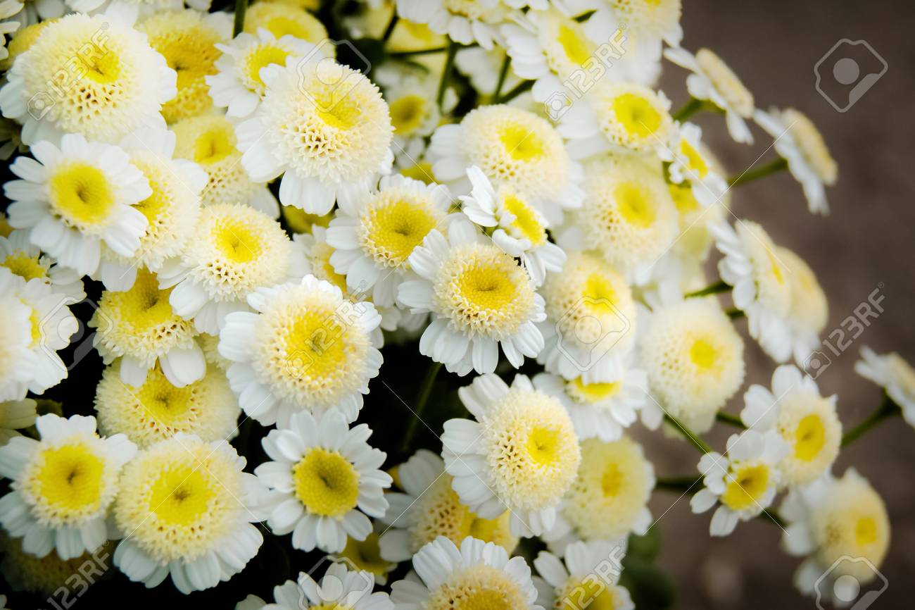 Bouquet Of White Daisies, A White Flower With A Yellow Center ...