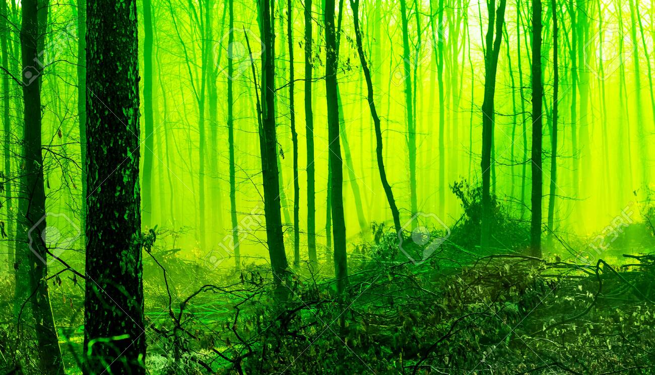 Misty morning in the spring forest. Mystic fairy-tale forest in the morning. Tinting in green - 152266254