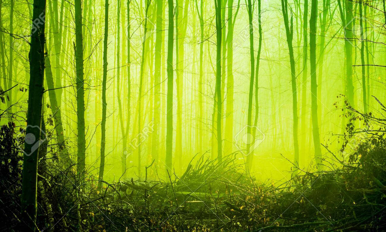 Autumn forest in the morning fog in bright green tones - 152576203