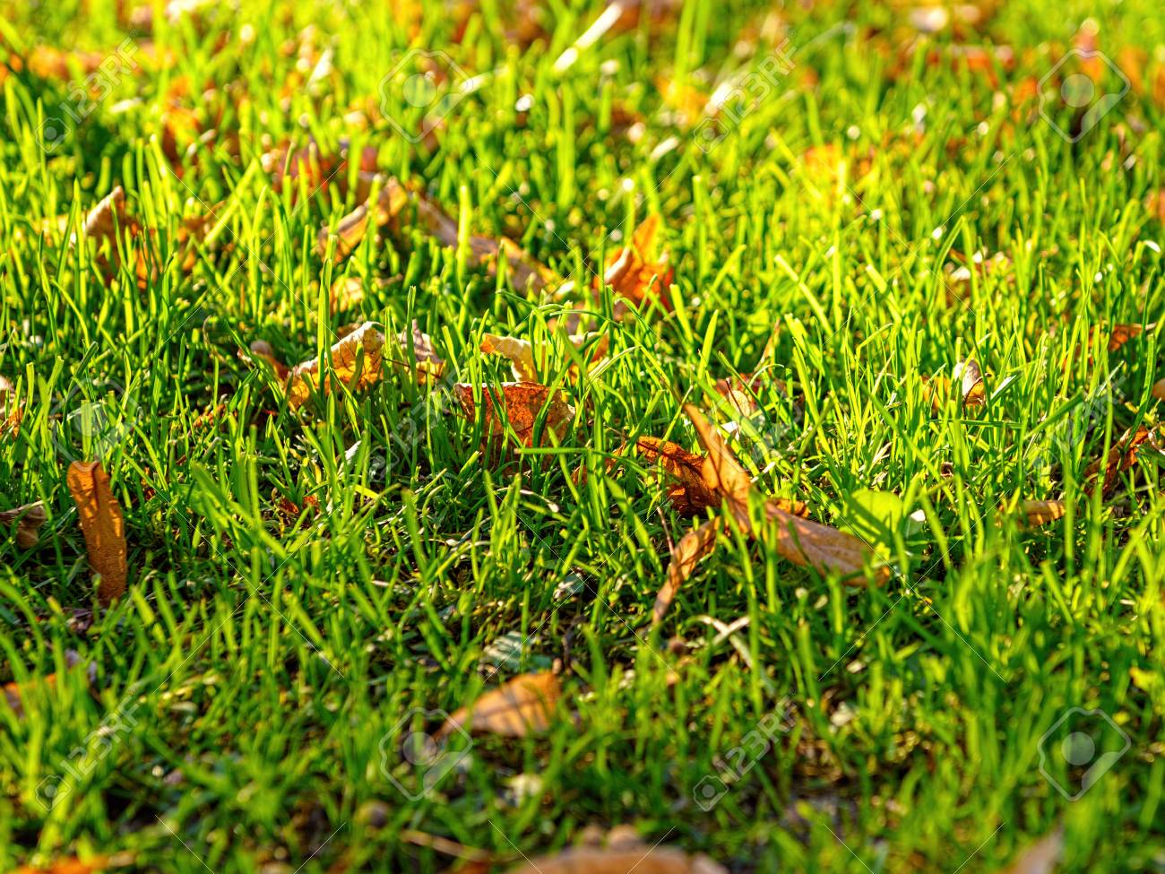 grass field from above. Autumn Dry Leaves On Green Grass Field, View From Above Stock Photo -  67007614 Field