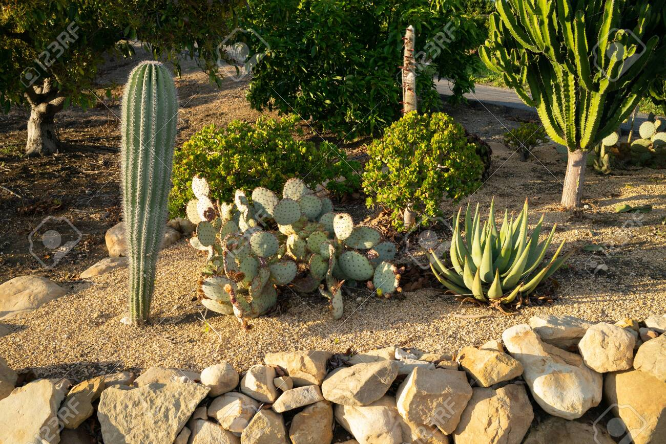 California Cactus Garden Landscape Design And Illustration Stock