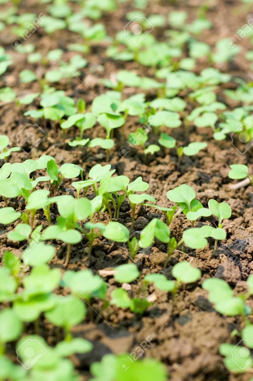 New seedling Stock Photo - 14975193