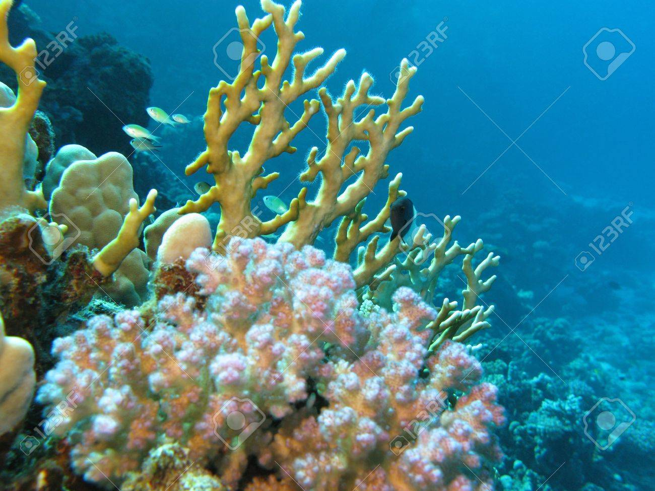 coral reef with fire coral Stock Photo - 14518126