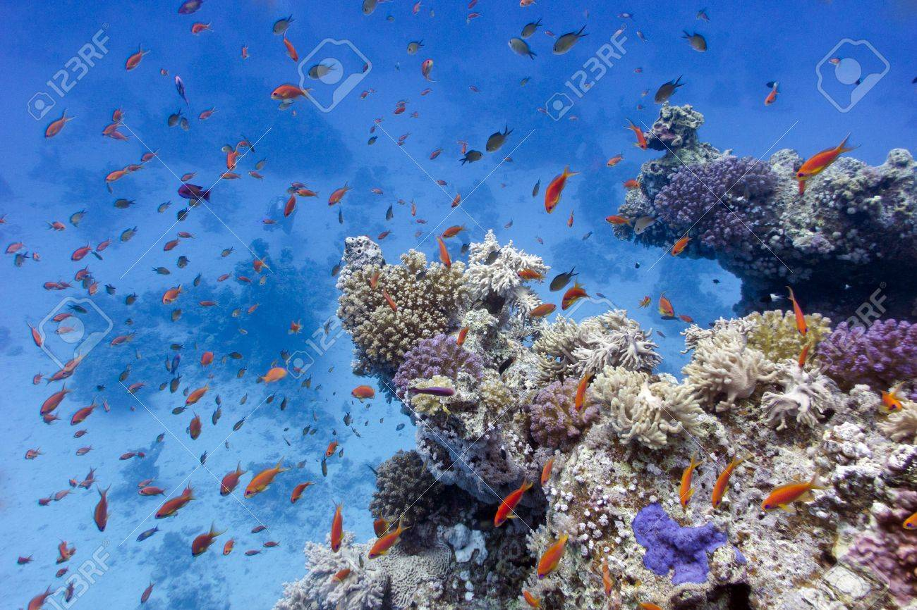 coral reef with soft and hard corals on the bottom of red sea  in egypt Stock Photo - 16799213
