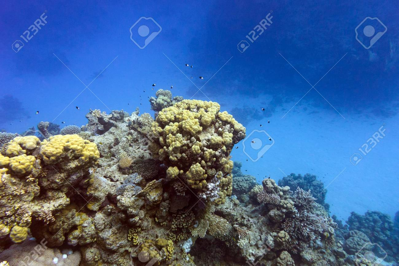 coral reef with hard corals at the bottom of tropical sea Stock Photo - 18133656