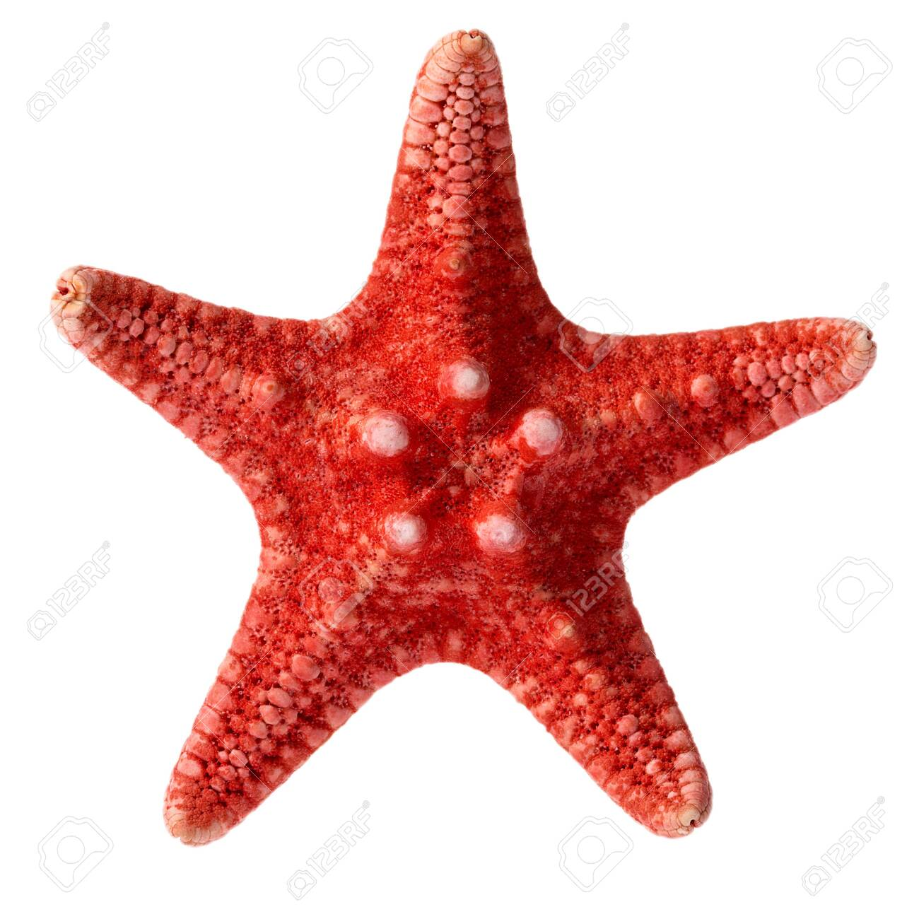 Dried red sea star isolated on white background, close up - 129448031