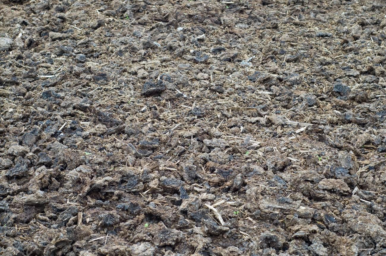 arid soil textured Stock Photo - 5363850