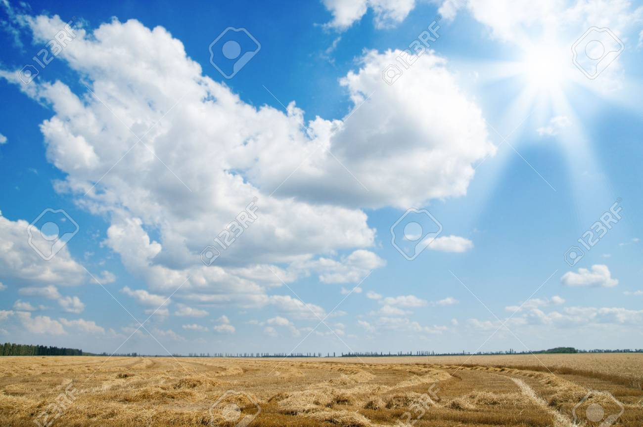ears of ripe wheat with sun Stock Photo - 6475151