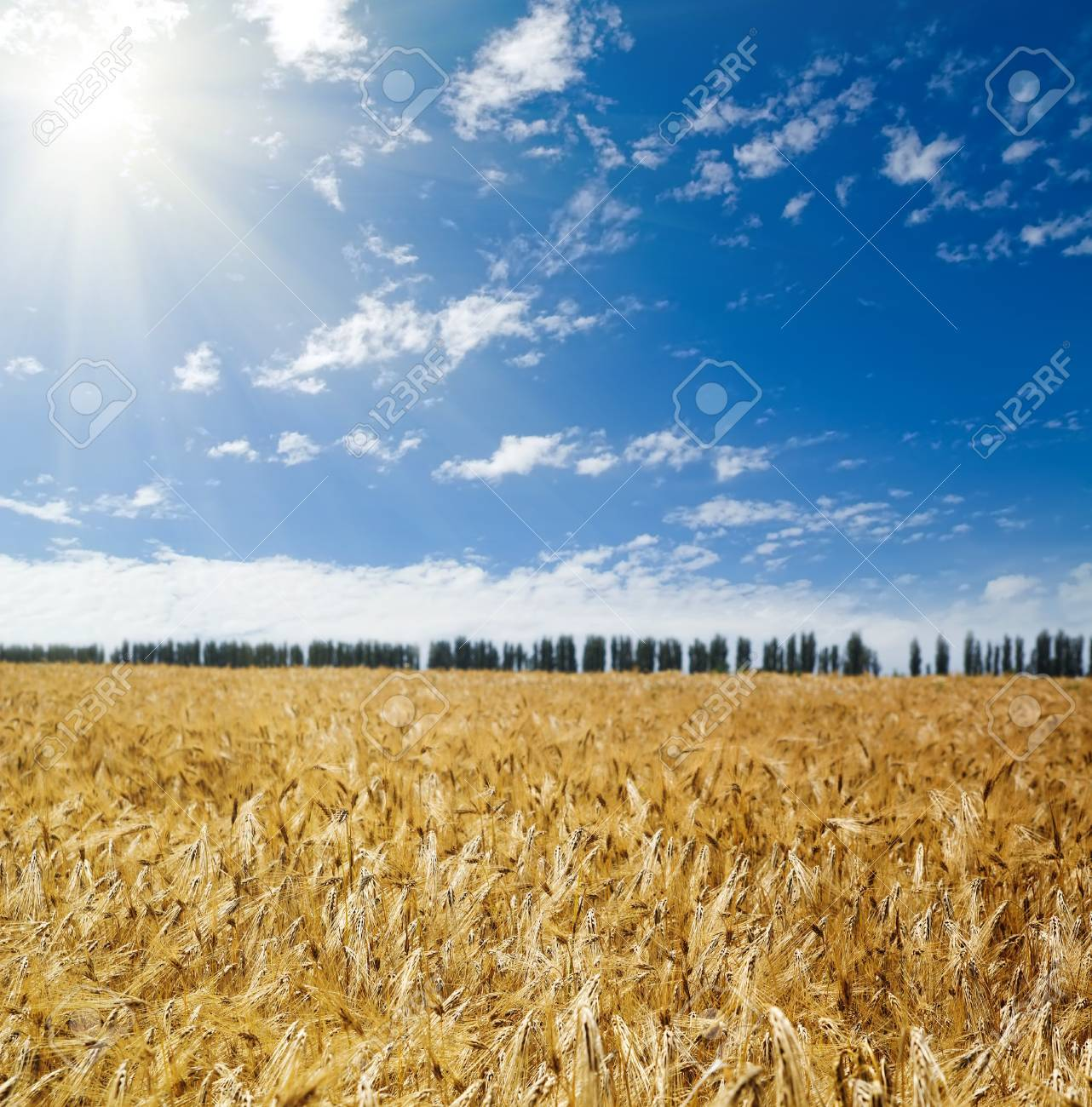 sun over field with wheat Stock Photo - 8124842