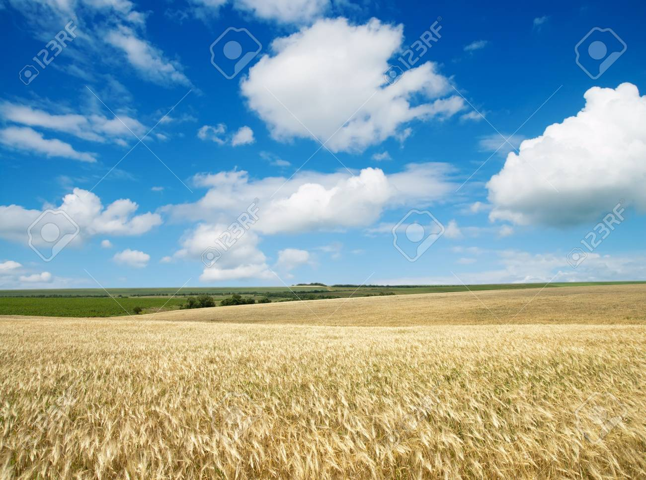 field of wheat under cloudy sky Stock Photo - 9086265