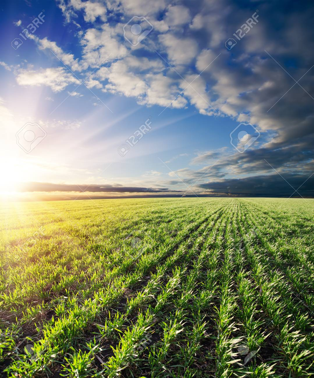agricultural green field and sunset Stock Photo - 9340076
