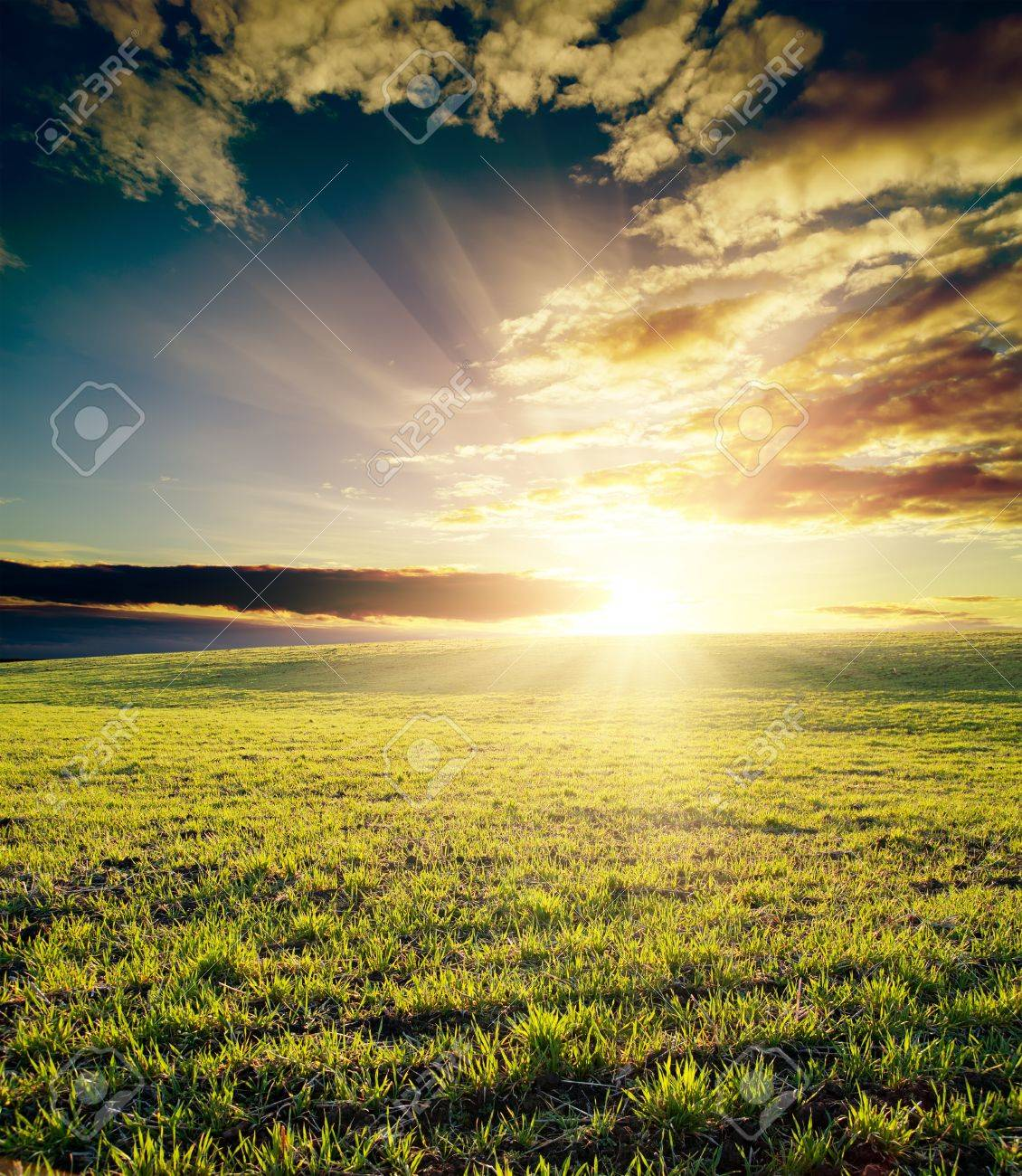 field of grass and cloudy sky on sunset Stock Photo - 9470505