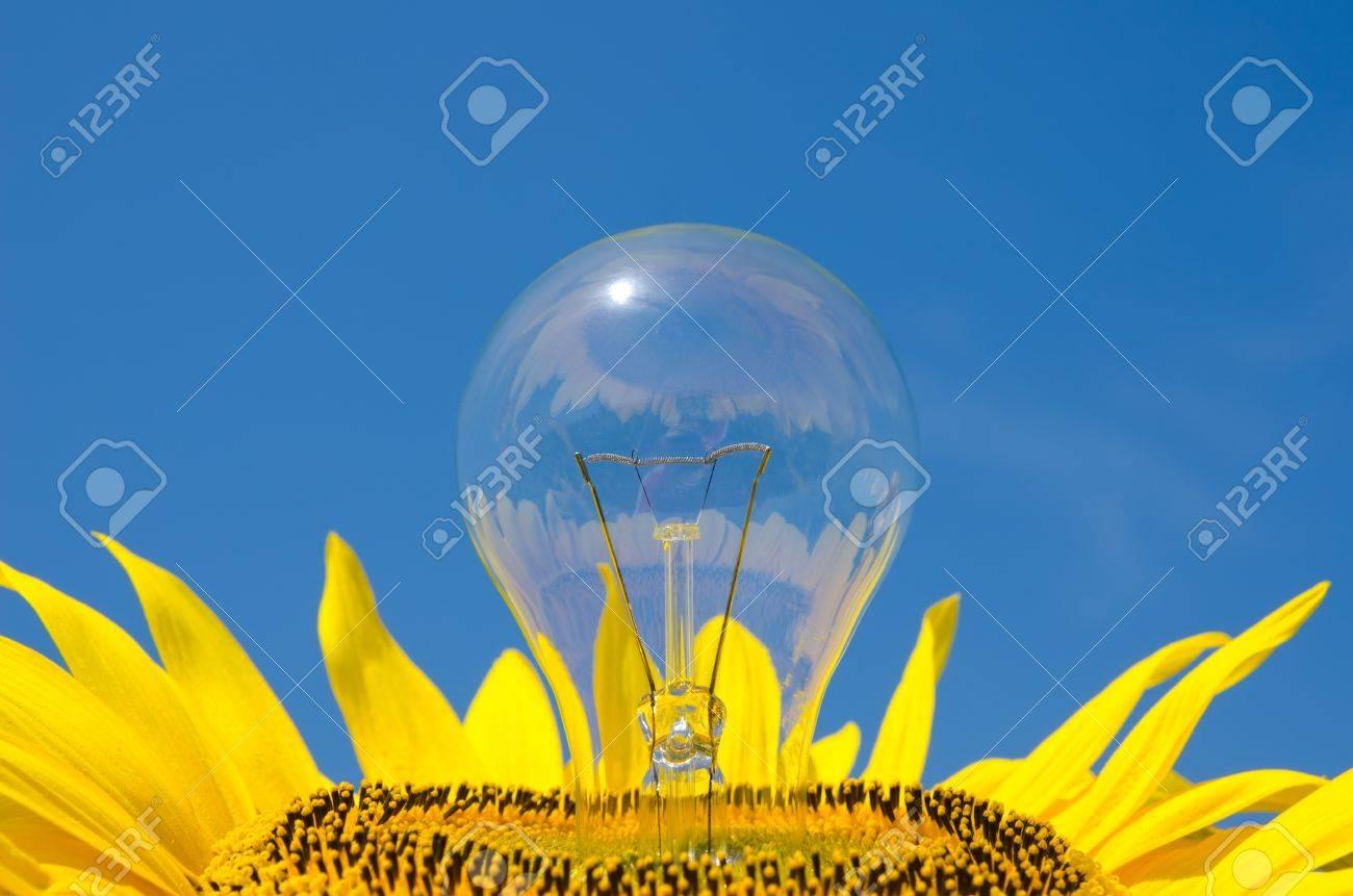 light bulb and sunflower Stock Photo - 10043322