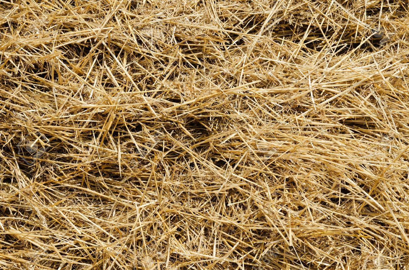 Textura Paja Imágenes De Archivo, Vectores, Textura Paja Fotos ...