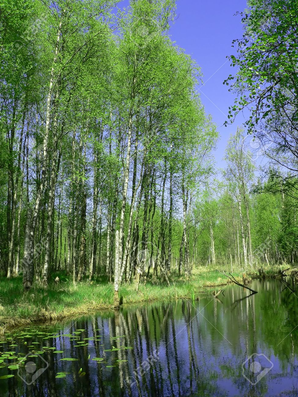 The Virgin Forest In Russia. Stock Photo, Picture And Royalty Free ...