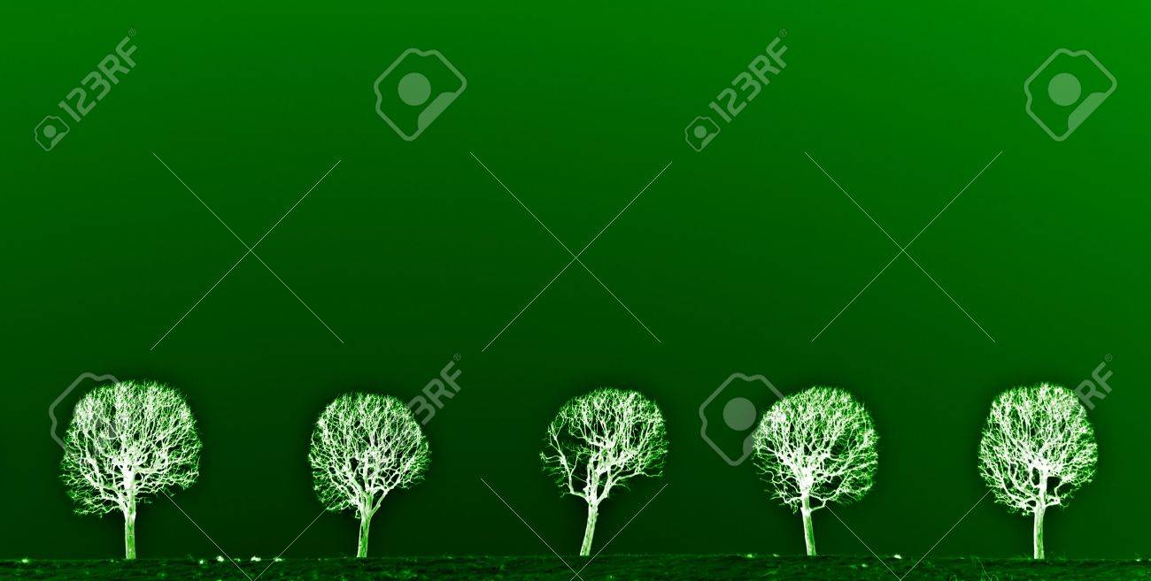 The line of trees. Stock Photo - 7563725
