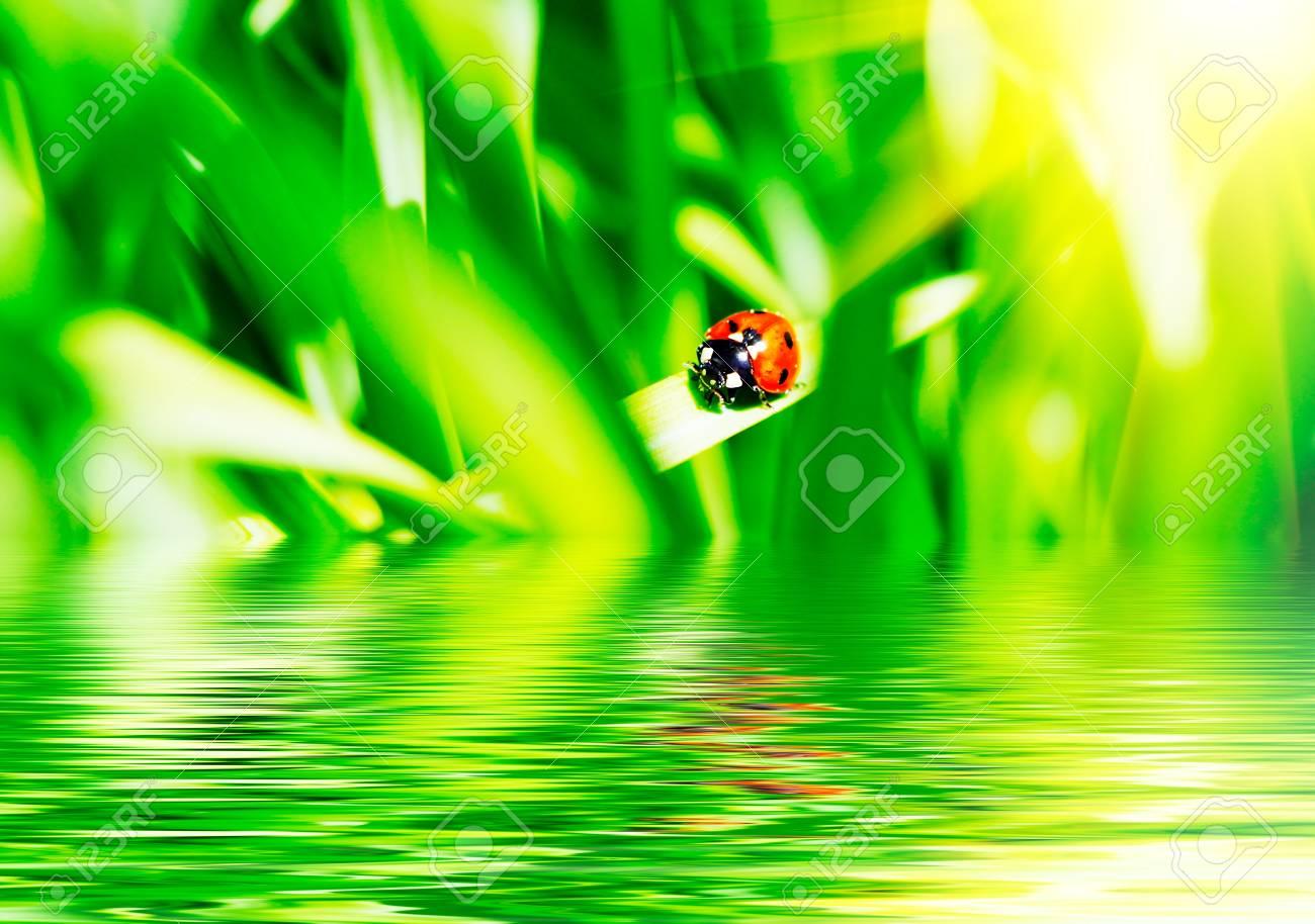 The ladybird on a grass. Stock Photo - 9966833