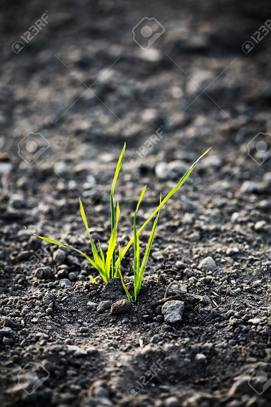 young plant on the ground Stock Photo - 11991517