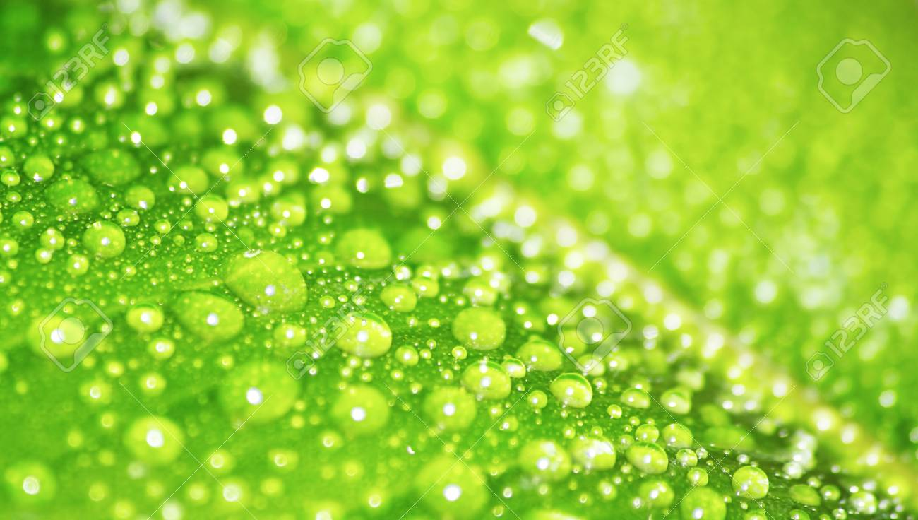 The leaf covered dew close up. Stock Photo - 13631516