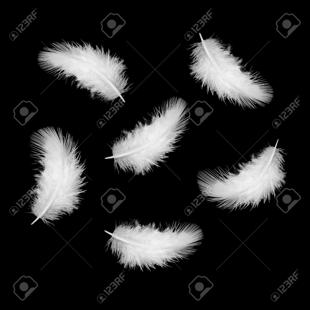 some white feathers on a black Stock Photo - 16701124
