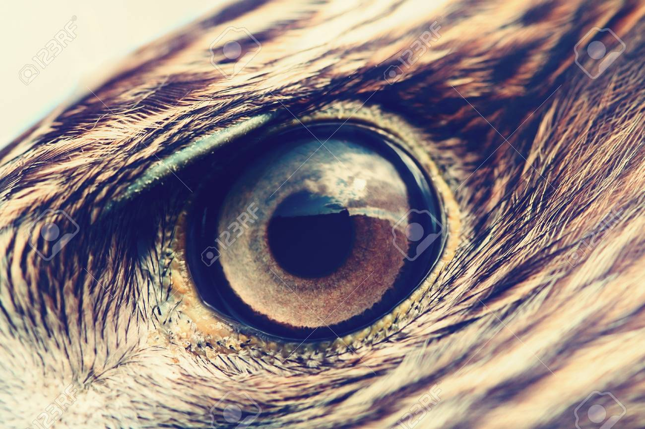 Eagle Eye Close Up Macro Photo Vintage Style Color Tone Stock Photo