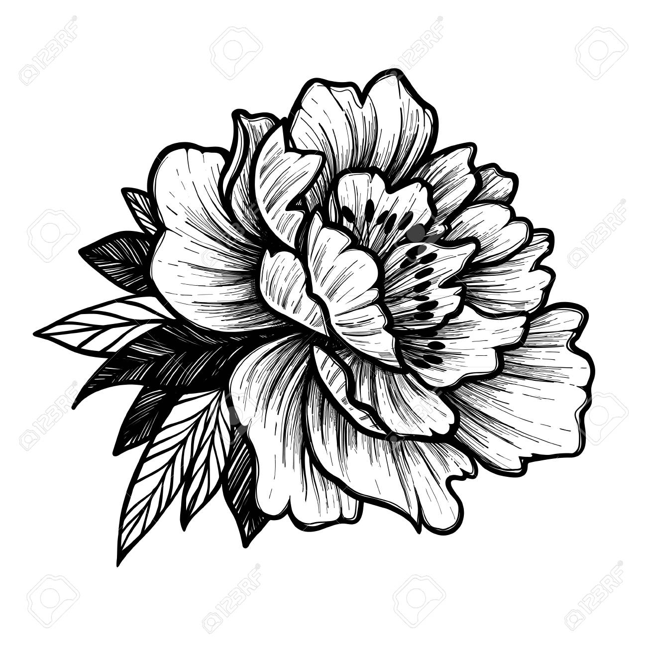 Hand Drawn Vector Illustration Peony Flower Floral Tattoo Royalty Free Cliparts Vectors And Stock Illustration Image 72095586