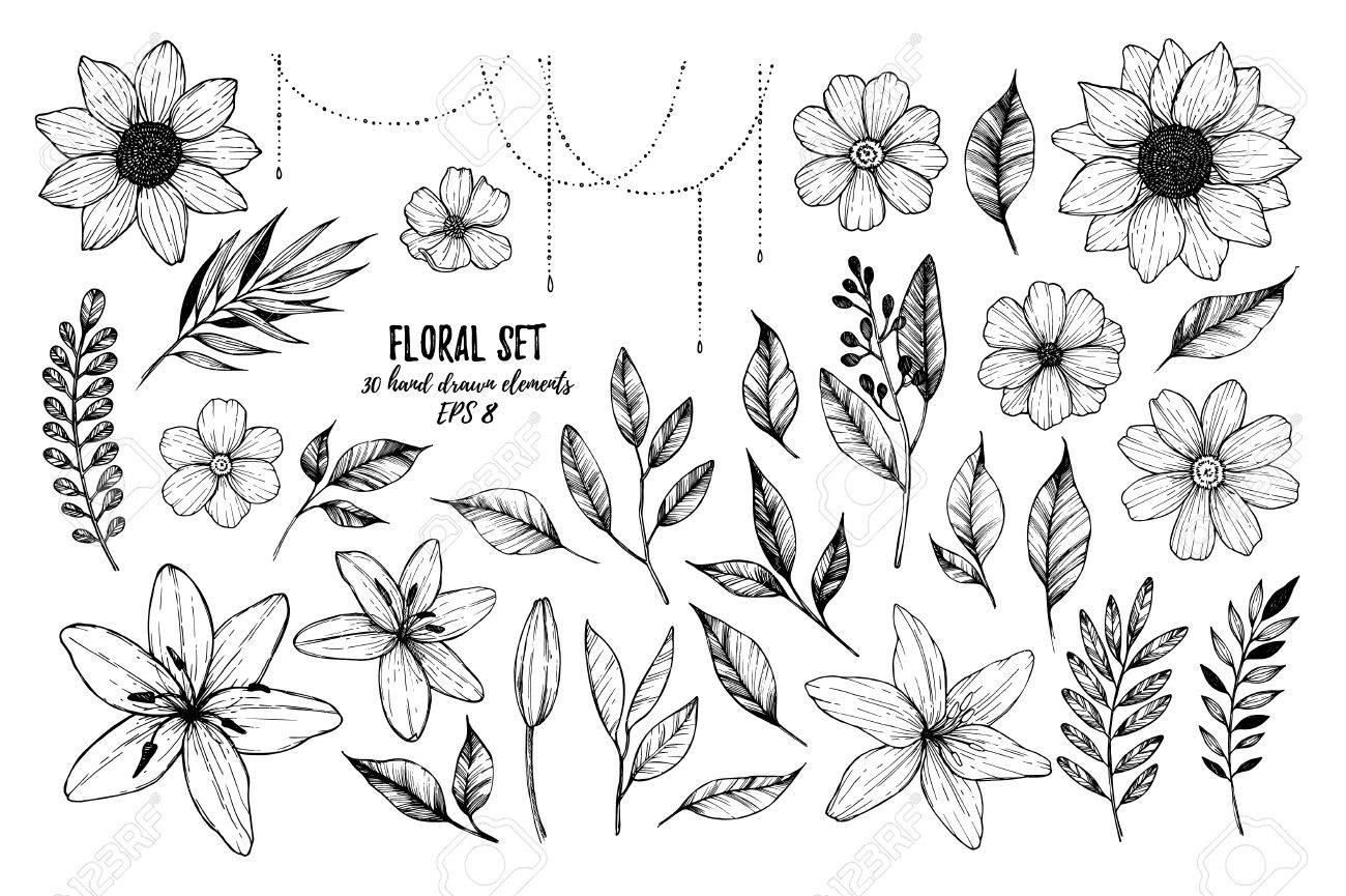 Ilustraciones Vectoriales Conjunto Floral Flores Hojas Y Ramas