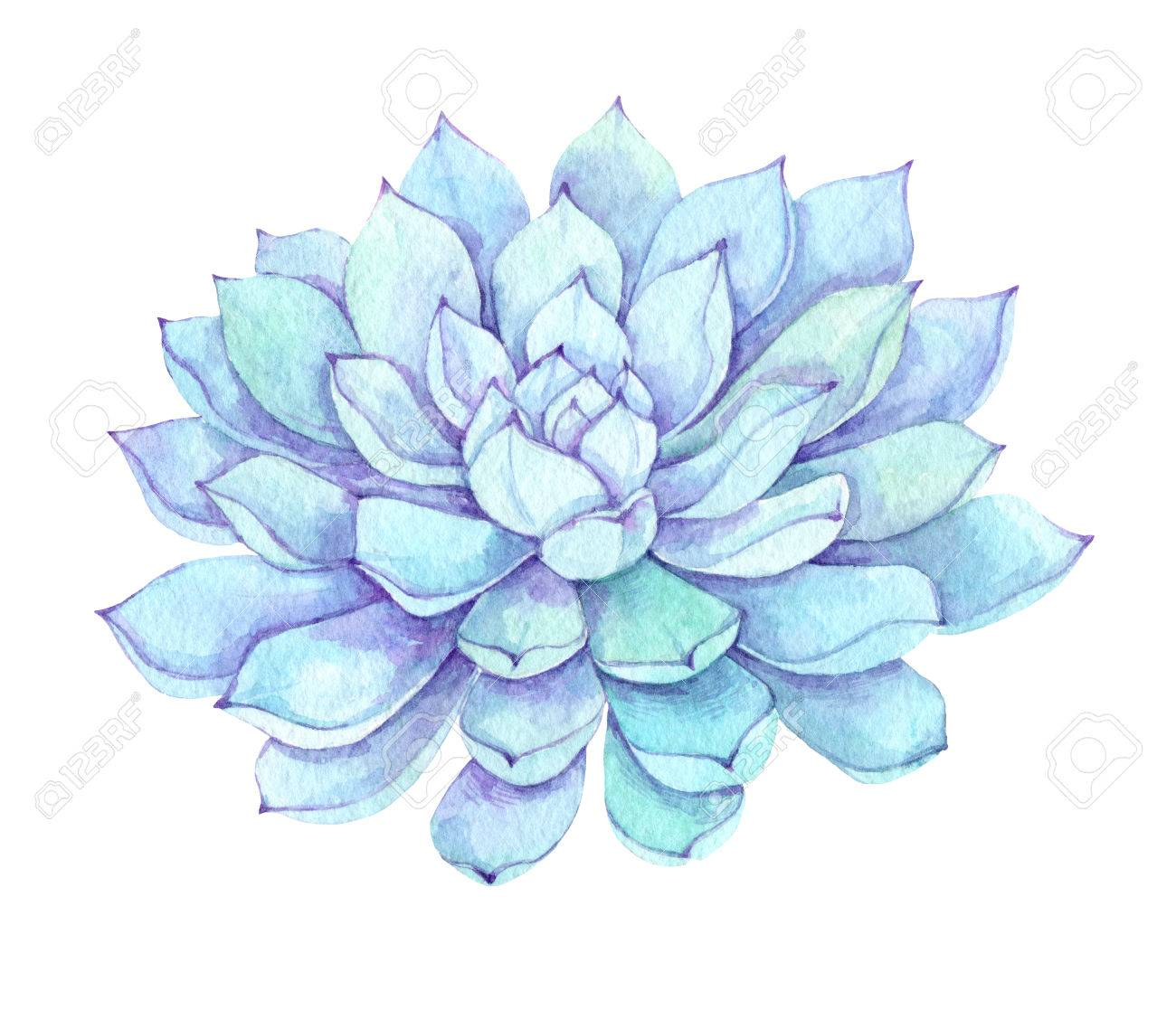 Watercolor Illustration Succulent Clipart Succulent And Cactus Stock Photo Picture And Royalty Free Image Image 84799936