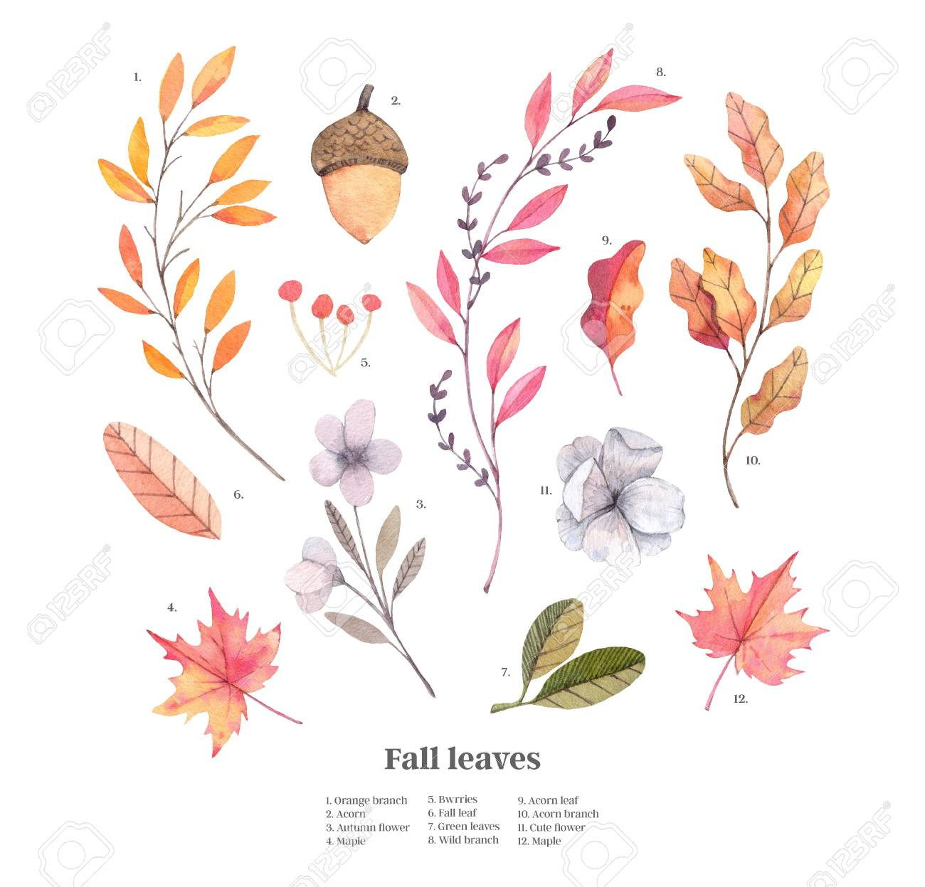 Hand Drawn Watercolor Illustrations Autumn Botanical Clipart