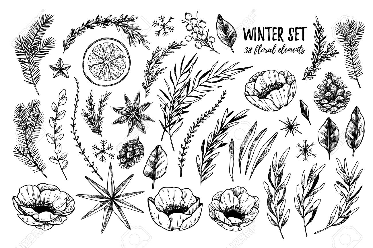 Illustrations Vectorielles Ensemble Floral D Hiver Fleurs